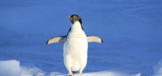 The Real-Time Penguin: Backlinking no Longer on Backburner
